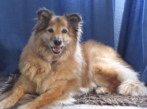 Madam - A Rescue Dog