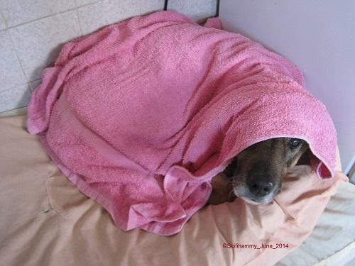 Snug as a Bug in a Rug - Little Monkey