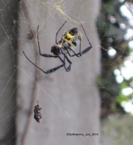Eeeuuuwww! Spider!