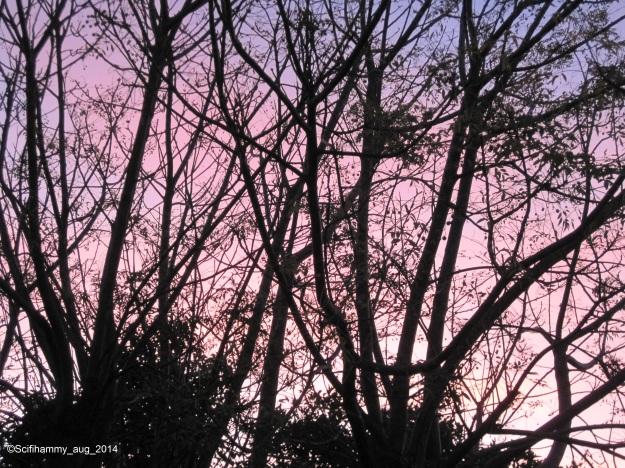 Syringa Tree Winter Silhouette