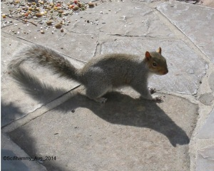 Sparky the Squirrel