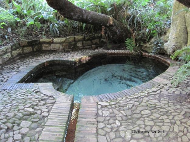 Bird Bath Kirstenbosch