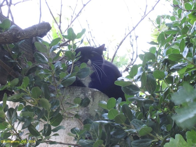 Kitty Hunting