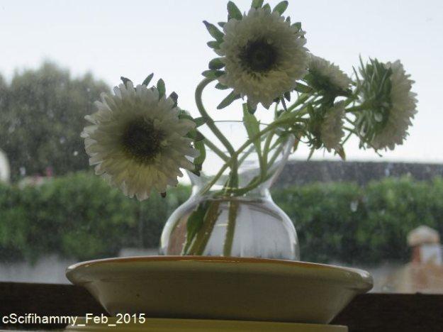 The Misfit Flowers