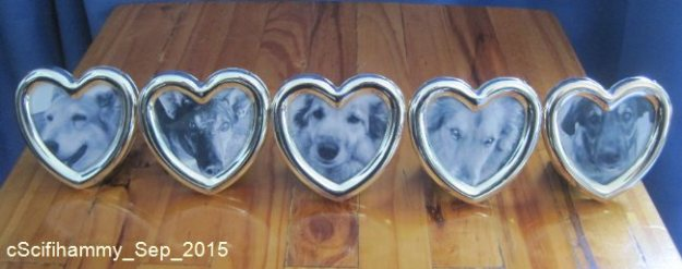 Dog Photo Frames 2