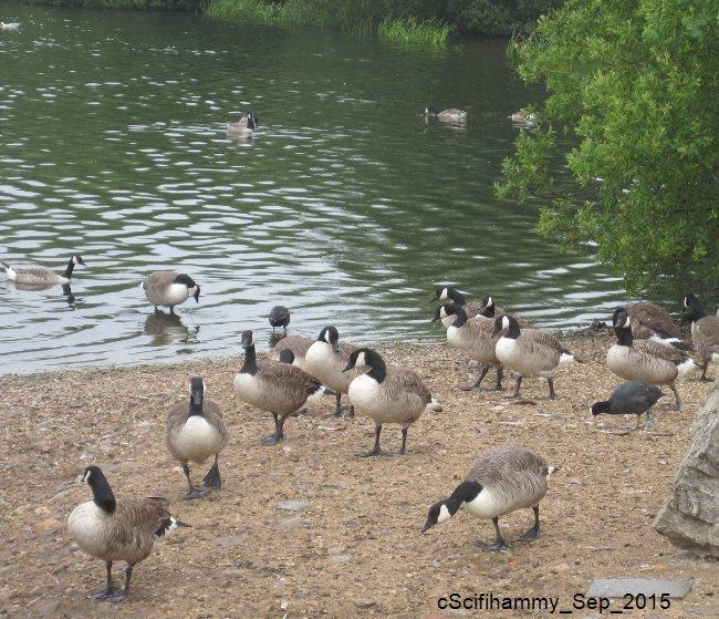 Can I Walk My Dog At Attenborough Nature Reserve