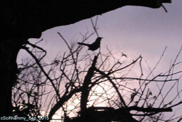 Nightingale?