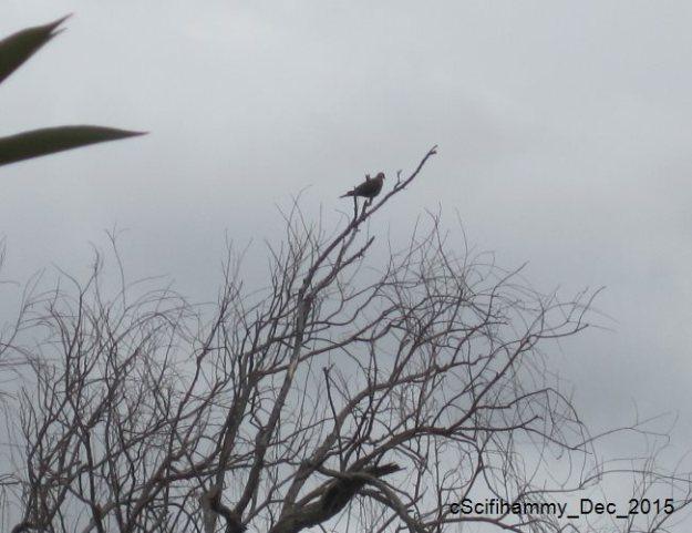 Partridge in a Pear Tree 3