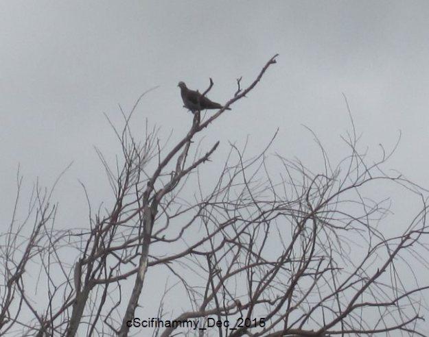 Partridge in a Pear Tree 2
