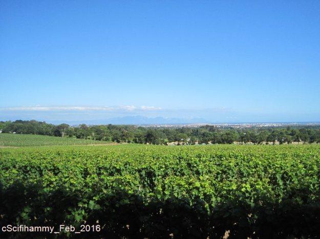 Cape Vineyards 2