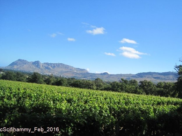 Cape Vineyards 3