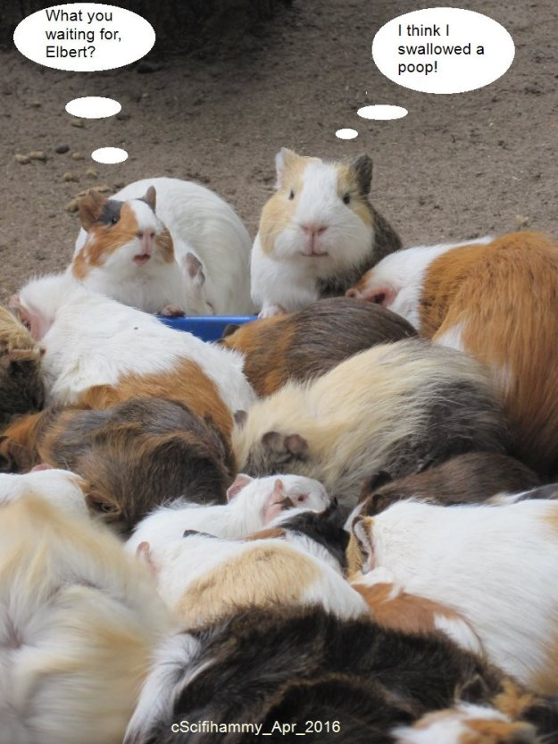 The Concerns of Guinea Pigs