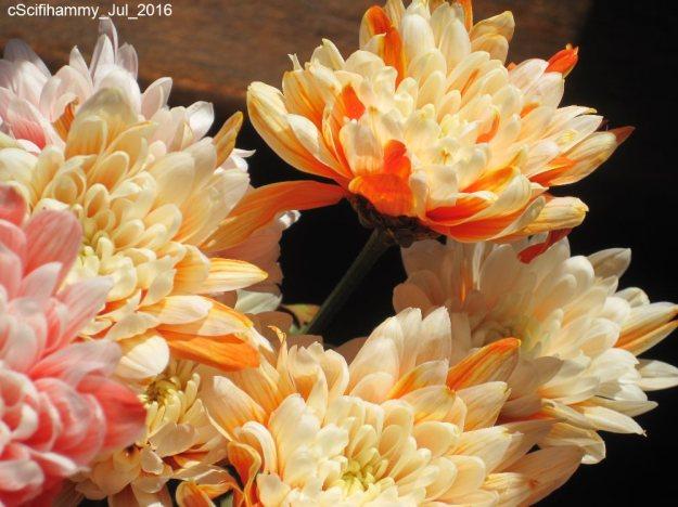 Comfort Flowers 1
