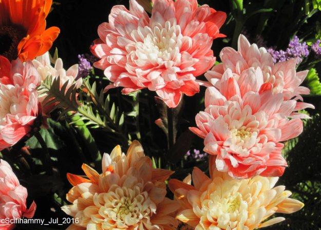 Comfort Flowers 2