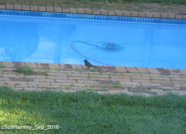 Bird? 2
