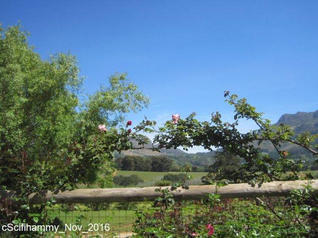 Climbing Roses 2