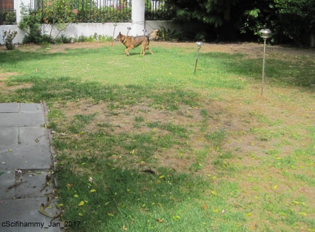 Lawn 4 and LM - 23 Dec
