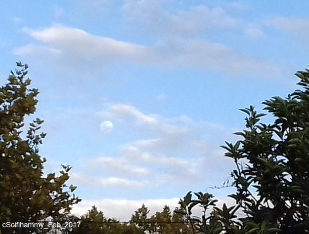 Moon Skies