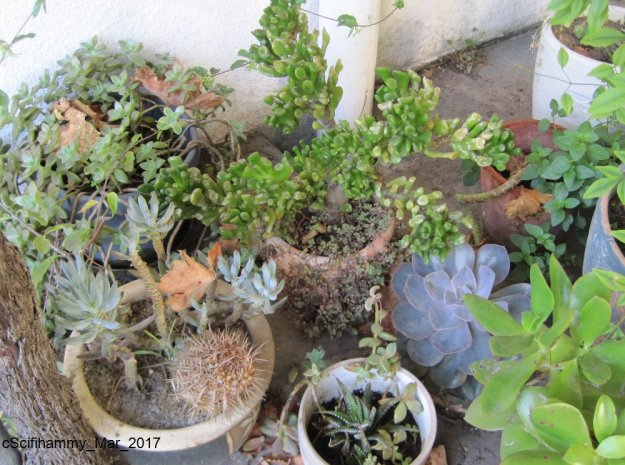 Alien Plant 4