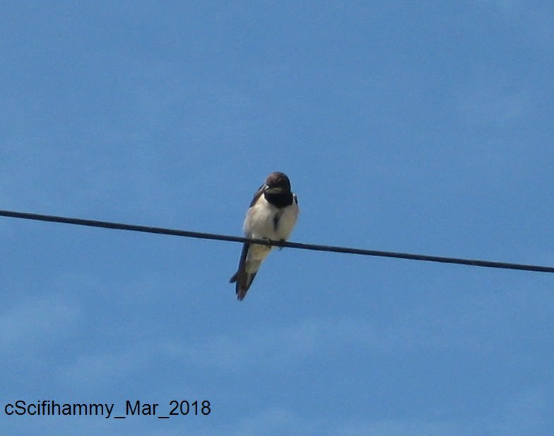 Bird on a Wire | Mad Cap Dog